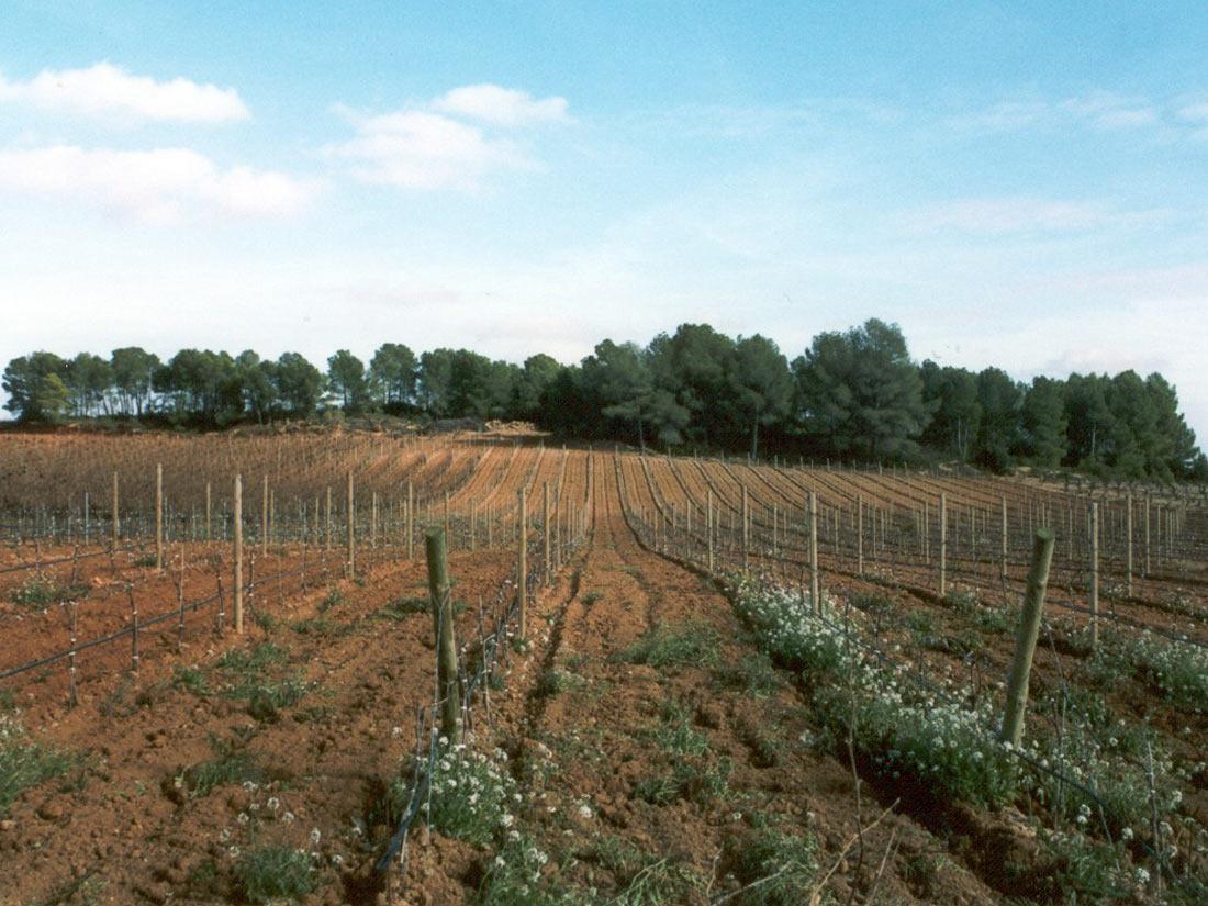 Villargordo del Cabriel